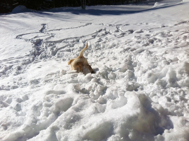 Lucy fetching snowballs