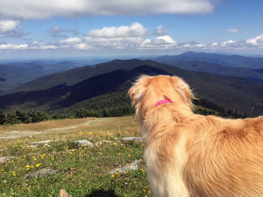 Lucy takes in the view atop Mt. Ellen.