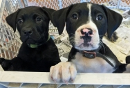RS_puppies_IMG_2485-1 copy