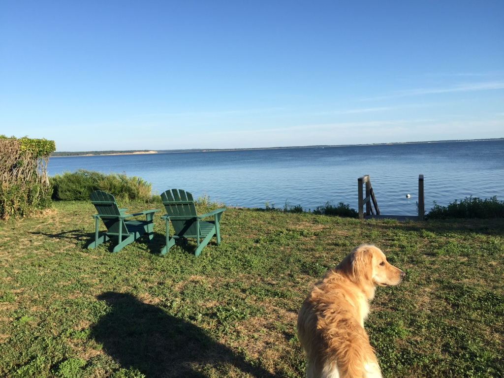 lucy-at-peconic-bay_img_5428