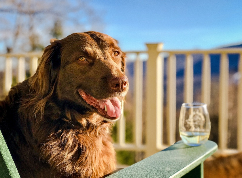 """9586ca62403 Charlie steals my seat on our first """"deck day"""" of the year"""