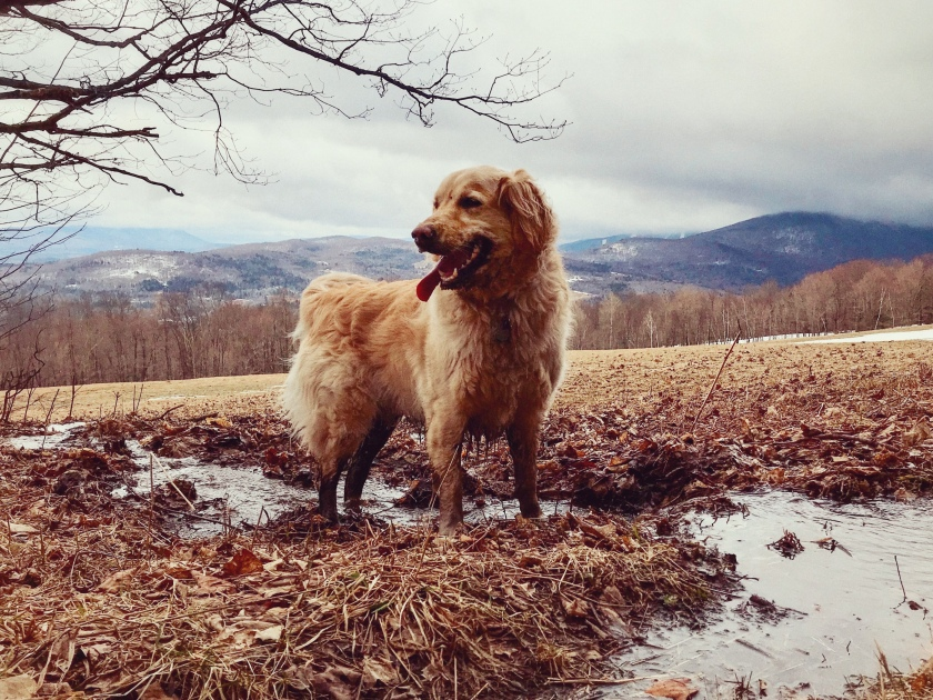 3ac32898cb9 wagmorevt – Happiness really is a warm puppy